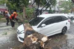 BPBD Jember: Bencana angin kencang terjadi di 10 lokasi